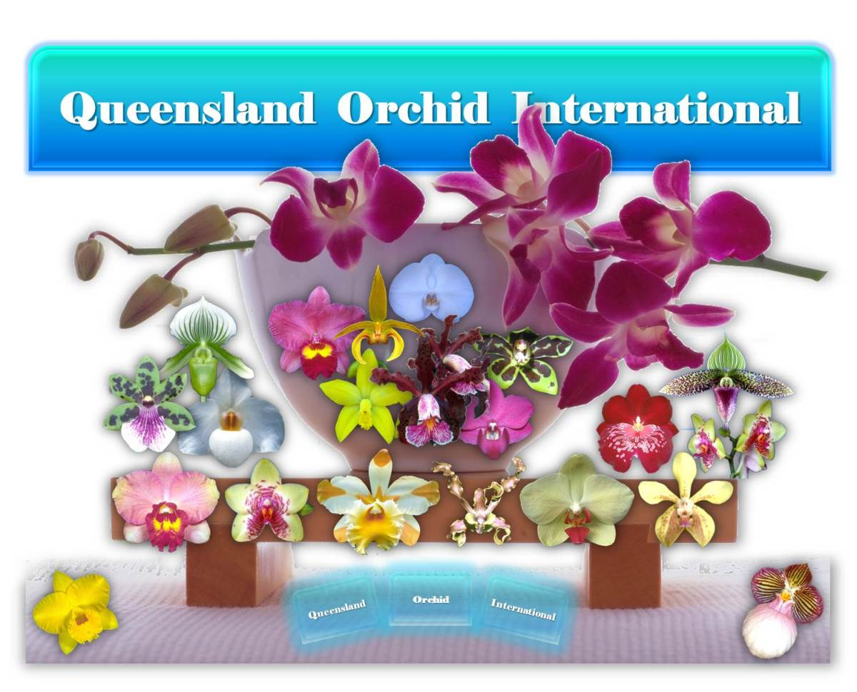 Queensland Orchid International Banner