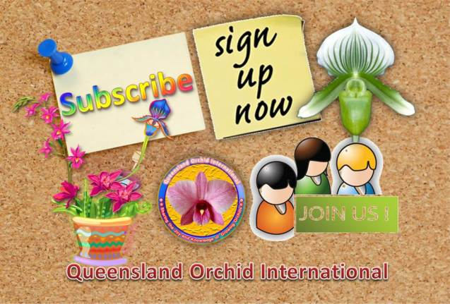 Queensland Orchid International Subsribe