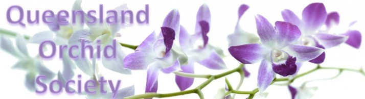 Click here to visit Queensland Orchid International