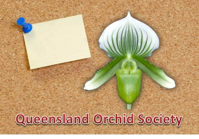 Queensland Orchid Society Bulletin Board