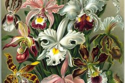 Orchid Blooms as Eye Candies