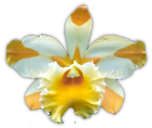 Blc. Yellow Ribbons 'Star Fighter' AD/QOS 2002