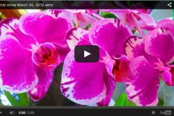 Queensland Orchids on YouTube
