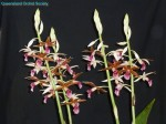 [Champion Australian Native Species] Phaius australis by T & J Peachey