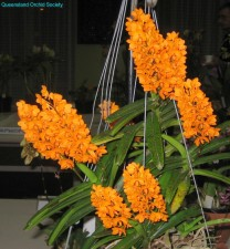 [Judges' Choice Species] V. garayi by Barry & Anne Kable