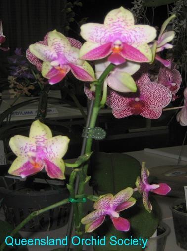 Stamps Orchid Flowers Uganda 1989 Set+blocks Wide Varieties Orchidee