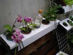 Self-Watering: Circulatory and Hydroponic Systems with Planting Pipes, Glass Bowls and Biological Ponds