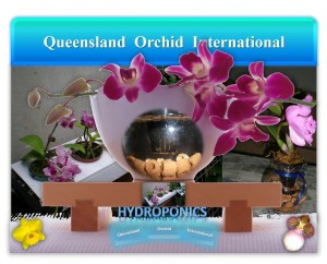 Queensland Orchid International Hydroponics