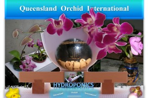 Queensland Orchid International Hydroponics