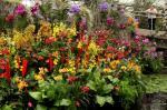 Kew Launch Their Tropical Extravaganza Festival