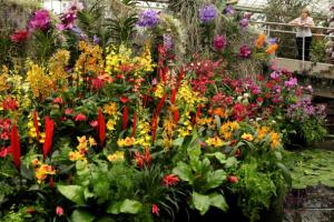 Kew Launch Their Tropical Extravaganza Festival