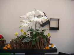 Artistic Display Shared in the Queensland Orchid Society Facebook Group and Potted Plant Society