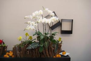 Artistic Display with Phalaenopsis, Paphiopedilum and Aroids