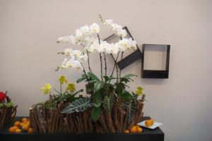 Artistic Display with Phalaenopsis, Paphiopedilum and Aroids