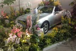 January Parade of Vertical Garden, Accent Plants, Artistic Display, Orchid Market and Orchid Shows