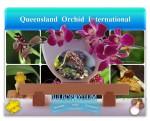 Queensland Orchid International Bulbophyllum
