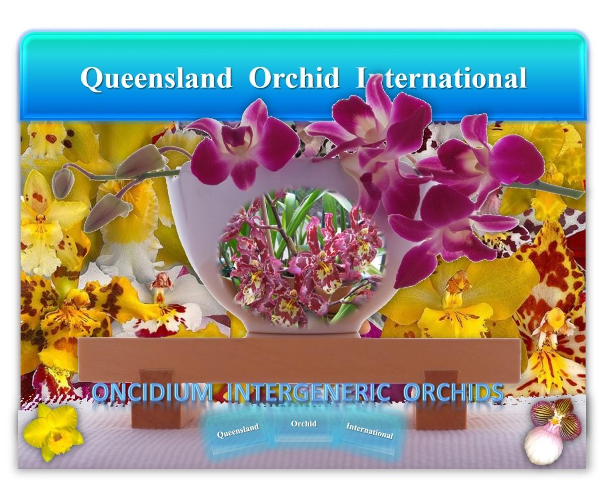 Queensland Orchid International Oncidium Intergeneric Orchids