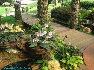 Thailand Orchids with the Illingworths (11)