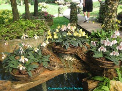 Thailand Orchids with the Illingworths (12)