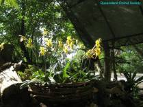 Thailand Orchids with the Illingworths (15)