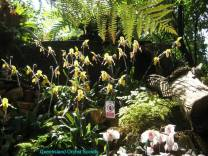 Thailand Orchids with the Illingworths (16)