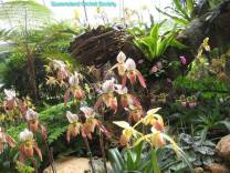 Thailand Orchids with the Illingworths (17)