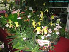 Thailand Orchids with the Illingworths (19)