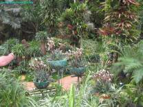 Thailand Orchids with the Illingworths (2)
