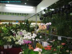 Thailand Orchids with the Illingworths (20)