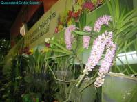 Thailand Orchids with the Illingworths (23)