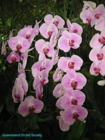 Thailand Orchids with the Illingworths (24)