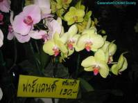 Thailand Orchids with the Illingworths (25)