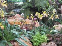 Thailand Orchids with the Illingworths (3)