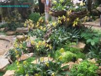 Thailand Orchids with the Illingworths (8)