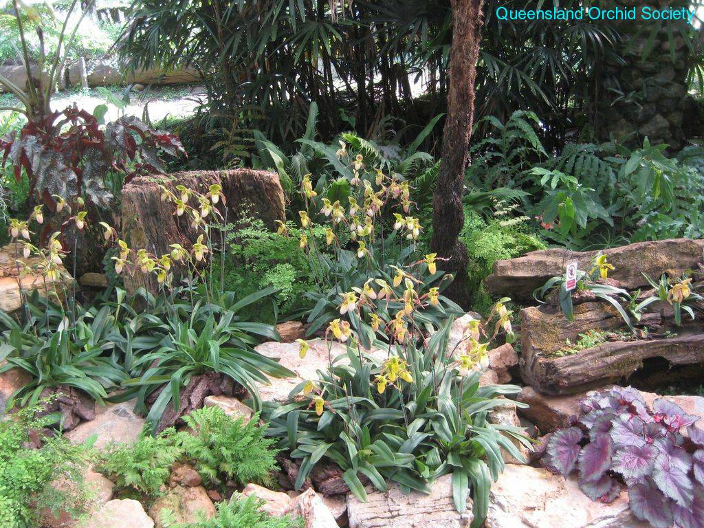 Thailand Orchids with the Illingworths (9)