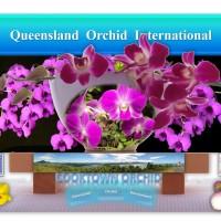 Cooktown Orchid (Dendrobium bigibbum, Dendrobium phalaenopsis, Vappodes phalaenopsis): Floral Emblem of Queensland, Australia 🇦🇺