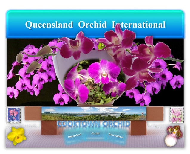 Queensland Orchid International Cooktown Orchid