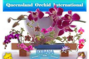 Queensland Orchid International Ikebana