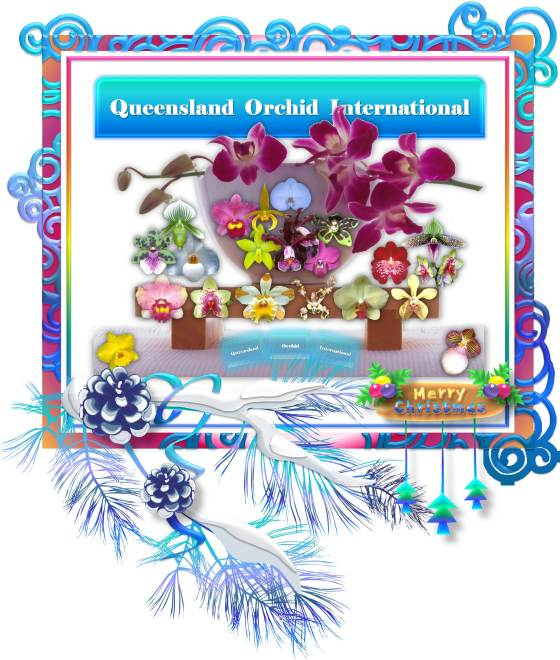 Merry Christmas Queensland Orchid International