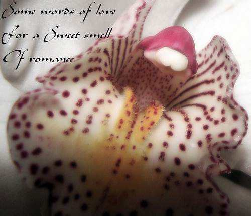 Orchid with a Sweet Smell of Romance