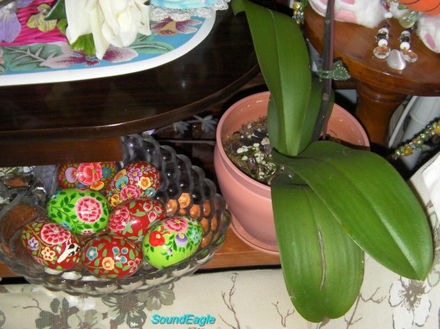 Queensland Orchid International Happy Easter (1)