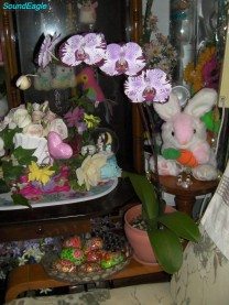 Queensland Orchid International Happy Easter (2)
