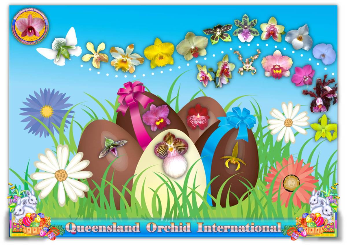 Queensland Orchid International Happy Easter