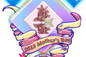 Celebrate 2015 Mother's Day with Queensland Orchid International