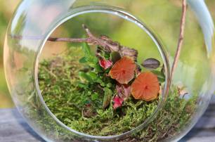 Lepanthes telipogoniflora grown in the glass orb (8)