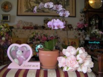 Queensland Orchid International 2015 Mother's Day (4)
