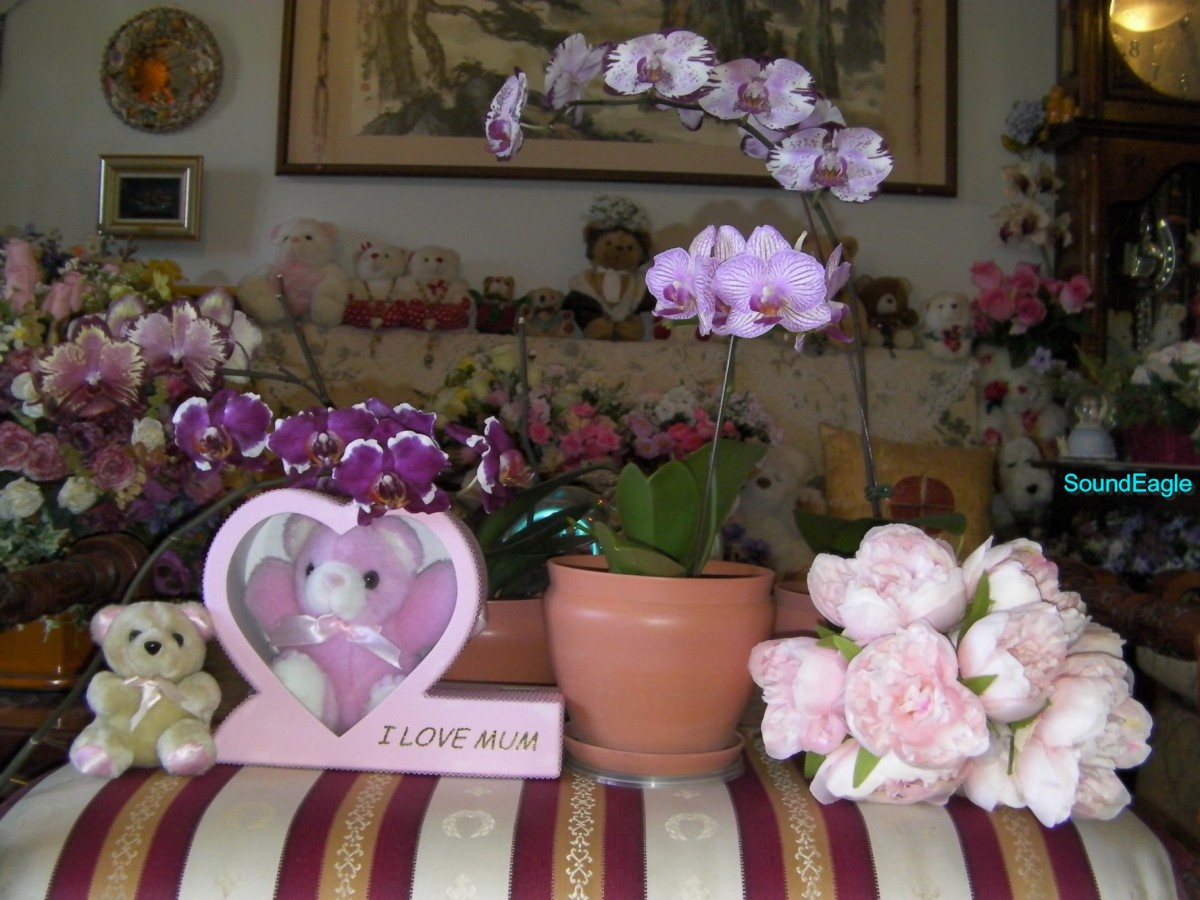 Queensland Orchid International 2015 Mother's Day (6)