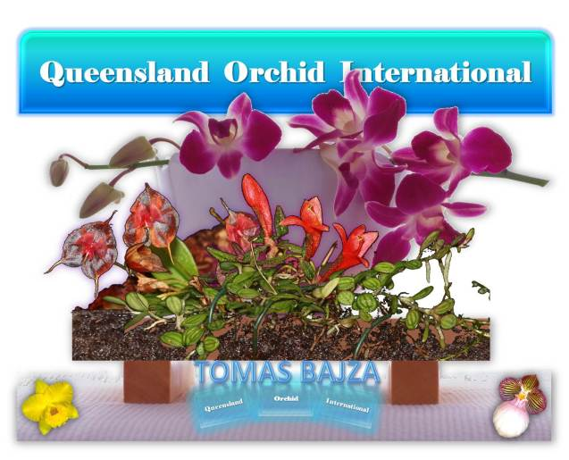Tomas Bajza at Queensland Orchid International