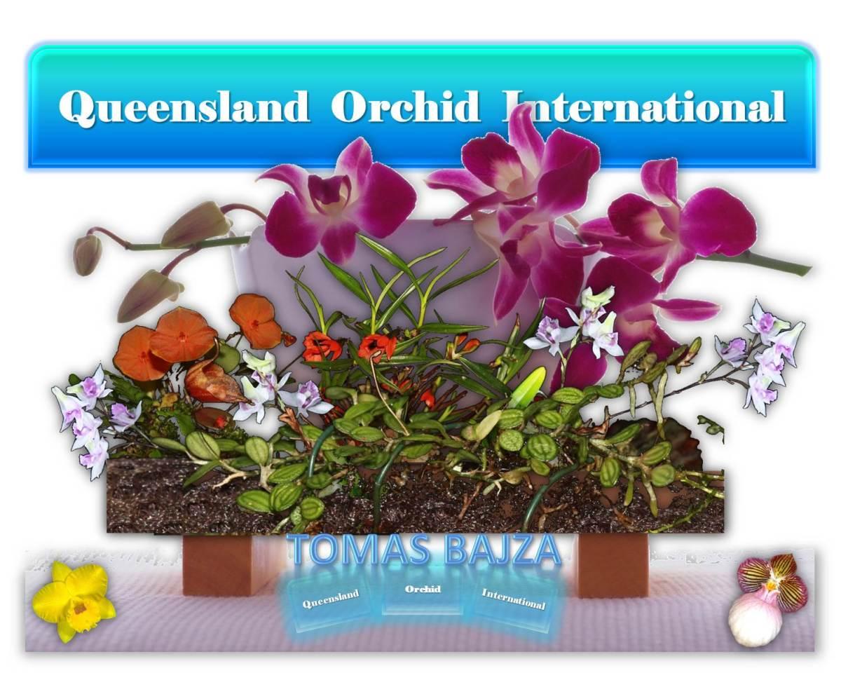 Tomas Bajza at Queensland Orchid International (2)