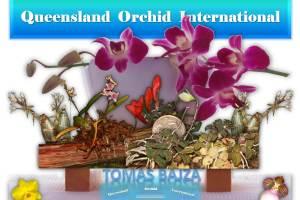 Tomas Bajza at Queensland Orchid International (1)
